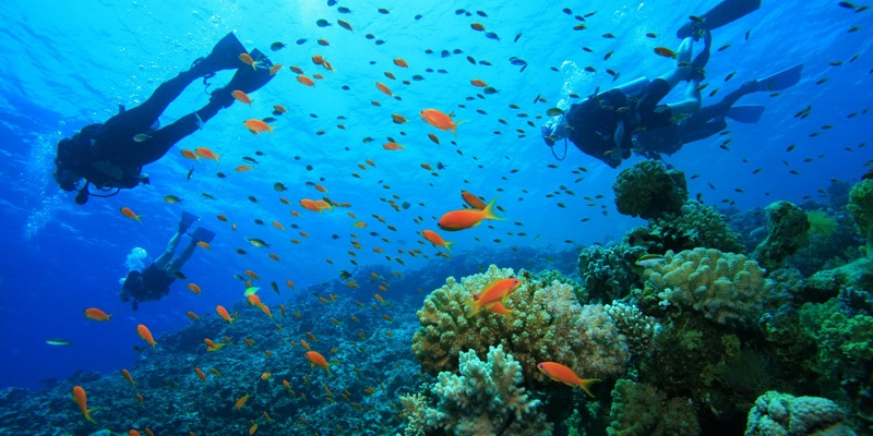 Diving in Corsica - All Luxury Apartments