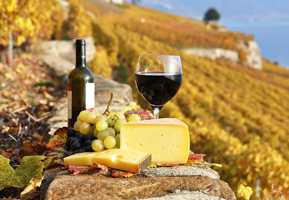 Wine Tours in Tuscany - All Luxury Apartments