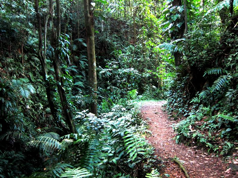 Hiking in Koh Samui - All Luxury Apartments