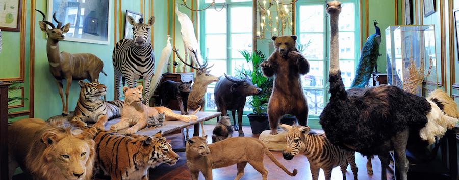 Deyrolle - best paris shops