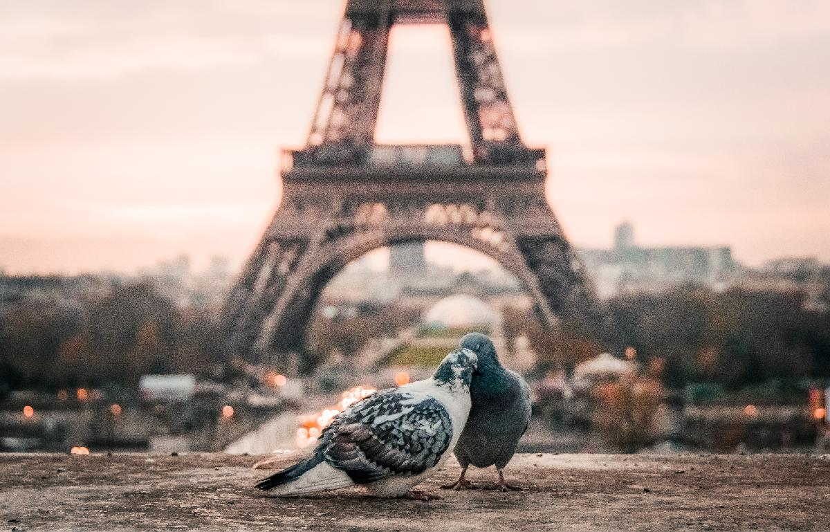 Things to Do in Paris in February 2020