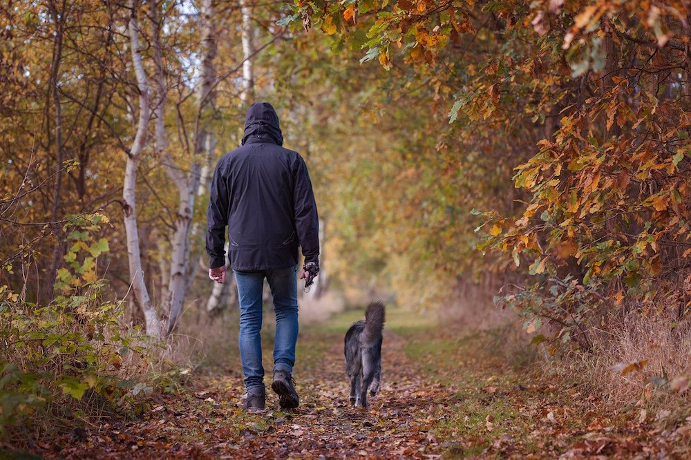 Doggone World: Best Places in London To Walk Your Dog