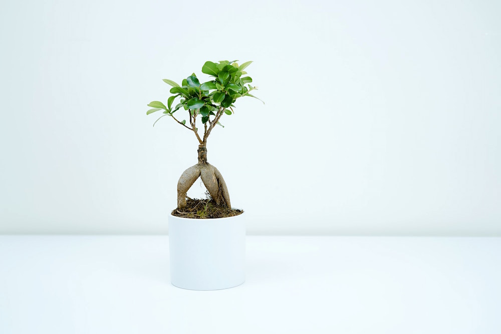 Freshen Up Your Home with These Creative Ways of Putting in Plants