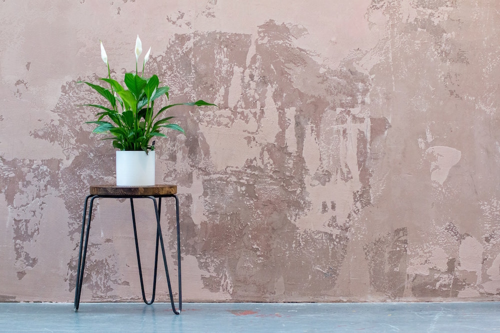 The Best Plants to Brighten Up Your Home