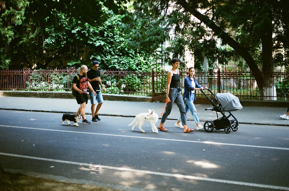 Paris' Best Parks to Walk Your Dog
