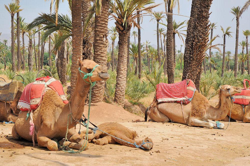 Ultimate Marrakesh Guide by Neighborhood