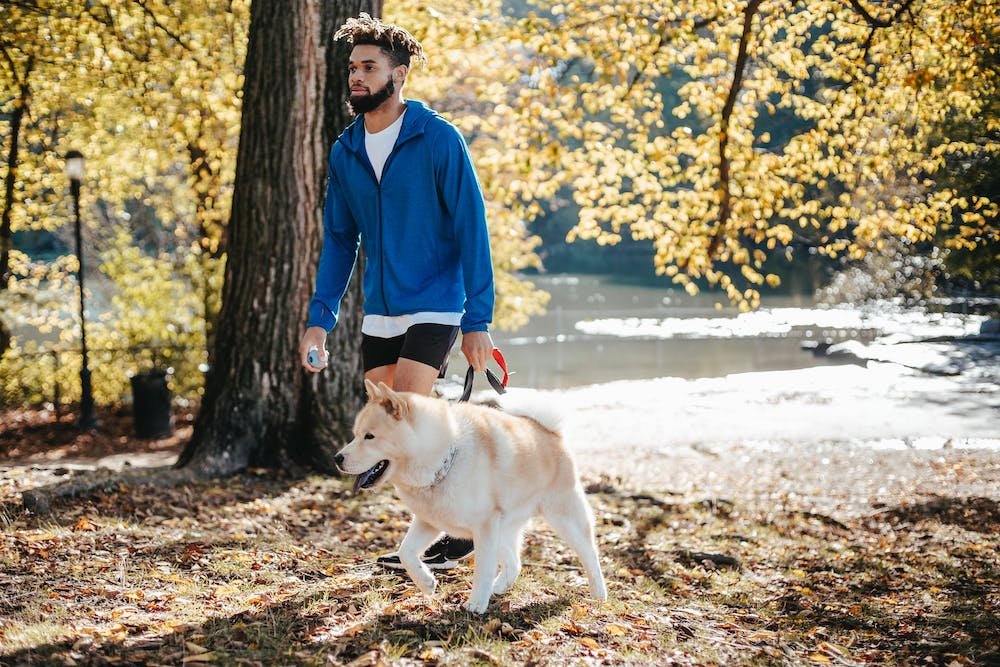 Where To Walk Your Dog in Leeds