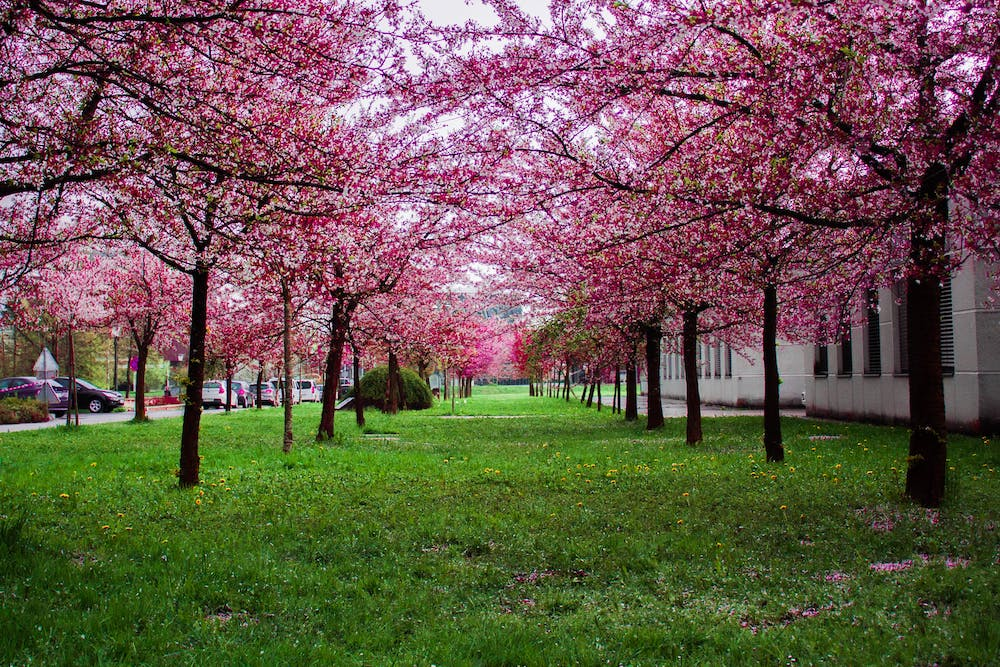 Top Five Reasons To Spend Springtime In Vienna