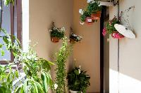 pretty blooms and foliage at Barcelona - Golden Apartment luxury holiday home and vacation rental