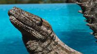 cool swimming pool of Saint Barth Villa La Desirade luxury holiday home, vacation rental