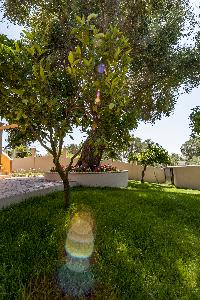 lush garden of Corfu Villa Stephandra luxury holiday home, vacation rental