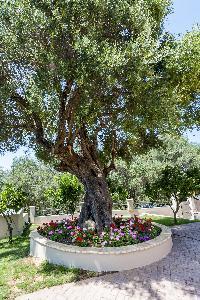 lovely garden of Corfu Villa Stephandra luxury holiday home, vacation rental