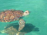 awesome wildlife near Bahamas - Sand Castle Exuma luxury apartment