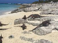 beautiful beachfront Bahamas - Sand Castle Exuma luxury apartment, holiday home, vacation rental