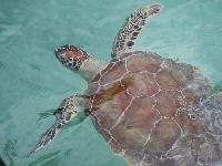 amazing wildlife near Bahamas - Sand Castle Exuma luxury apartment