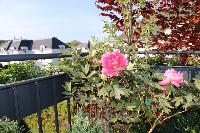 beautiful foliage and blooms at Vienna - Golf Apartment luxury vacation rental and holiday home