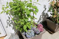cool garden plants at Vienna - 2 Bedroom Patio Apartment luxury holiday home and vacation rental