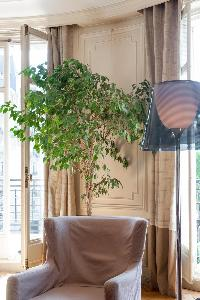 beige armchair and potted plant between beige draped windows in Paris luxury apartment