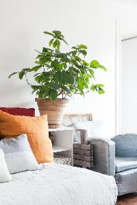 potted plants in Paris luxury apartment
