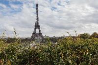 the great Eiffel Tower near Paris - Rue Scheffer II luxury apartment
